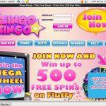 Zingobingo Odds To Win