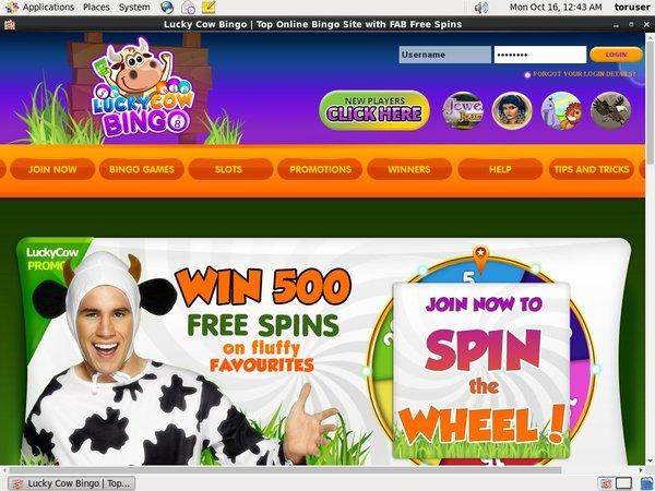 Lucky Cow Bingo Pay